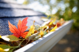 October Jobs: How to prepare your home and garden for autumn